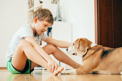 Boy and dog sits on the floor at home Stock Image