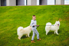 Boy and dogs Stock Images