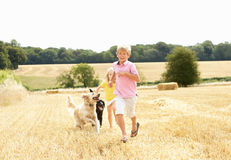 Boy With Dogs Running Through Summer Harvested Fie Royalty Free Stock Image