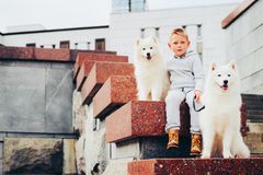 Boy and dogs Royalty Free Stock Images