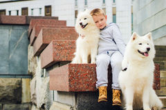 Boy and dogs Stock Image