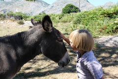 Boy with the donkey Royalty Free Stock Images