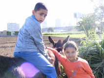 Boy on a donkey in a farm, rural life Royalty Free Stock Photos