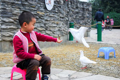 Boy and dove Stock Photography