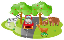 Boy driving in open safari. Illustration Royalty Free Stock Photos