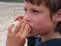Boy eating. A young boy eating a hotdog on the sand dunes at the beach fete Royalty Free Stock Photos