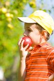 Boy eating apple. Beautiful boy eating a delicious red apple Stock Images