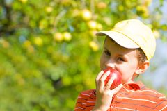 Boy eating apple. Beautiful boy eating a delicious red apple Royalty Free Stock Image