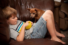 Boy eating cereal with little dog watching. A seven year old boy relaxes on a leather couch, holding a bowl with food in it while his little dogs waits for a Stock Images