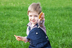 Boy eating cookies Stock Image