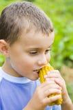 Boy eating corn. Boy eating fresh boiled corn Royalty Free Stock Photos