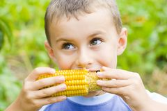 Boy eating corn. Boy eating fresh boiled corn Royalty Free Stock Photos