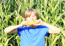 Boy eating corn. Boy - kid in blue t-shirt biting corn with corn field behind royalty free stock photo