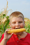 Boy eating fresh sweetcorn Royalty Free Stock Photo