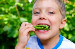 Boy eating a green Peas Stock Image