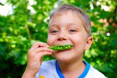 Boy eating a green Peas Stock Photo