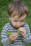 Boy eating peas Stock Image