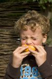 Boy eating Sour Grapefruit. Boy (7) taking a very big bite out of a sour grapefruit Stock Photo