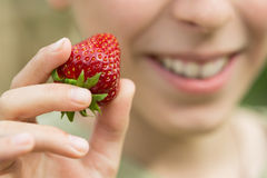 Boy eating strawberries. In the garden Stock Photography