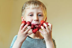 Boy eating strawberry. Put on his fingers and smacking lips Royalty Free Stock Photo