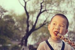 Boy eating sugarcoated haws Royalty Free Stock Photo