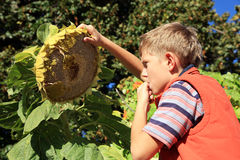 Boy eating sunflower seeds Royalty Free Stock Image