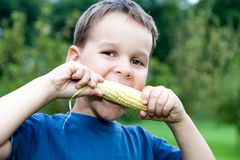 Boy eating young corn. Outdoors Stock Image