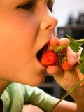 Boy eats fresh organic strawberries from own garden Stock Photo