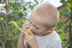 Boy eats a pear from a tree Stock Photography