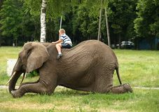 Boy on elephant Royalty Free Stock Image