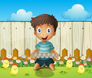 A boy with an empty egg tray and the little chicks Stock Image