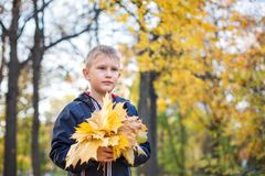 A boy of European appearance in the park with a bouquet of leaves. Yellow blurred background with bokeh. Autumn day royalty free stock image