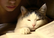 Boy evening read book with cat Stock Images