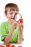 Boy examines a tomato with a magnifying glass Stock Images