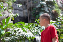 Boy examines tropical vegetation Stock Photo