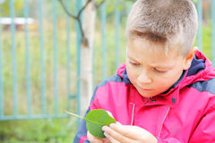 Boy examining leaf Royalty Free Stock Photos