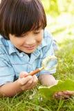 Boy examining leaf Stock Photography
