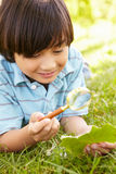 Boy examining leaf Royalty Free Stock Photo