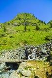 Boy explores nature on the mountain Stock Image