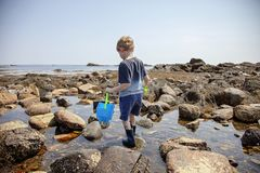 Boy exploring tide pools on New Hampshire coast. Curious Four year old boy exploring rocky tide pools on the coast of New Hampshire looking for sea life royalty free stock image