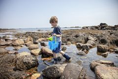 Boy exploring tide pools on New Hampshire coast. Curious Four year old boy exploring rocky tide pools on the coast of New Hampshire looking for sea life royalty free stock photos