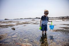 Boy exploring tide pools on New Hampshire coast. Curious Four year old boy exploring rocky tide pools on the coast of New Hampshire looking for sea life royalty free stock photo