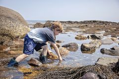 Boy exploring tide pools on New Hampshire coast royalty free stock photo