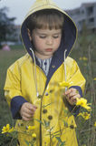 A boy  exploring the wildflowers on a rainy day, Washington, D.C. Royalty Free Stock Photography