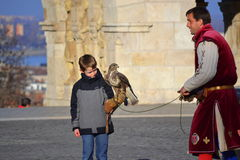Boy falcon falconer Royalty Free Stock Photos