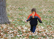Boy in Fall Coonskin Cap. Boy walking through autumn leaves facing away from camera, with coonskin cap Royalty Free Stock Photos