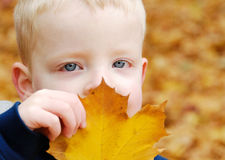 Boy and Fall Leaf Royalty Free Stock Images