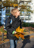 A boy  fall leaves on a sunny day Royalty Free Stock Photos