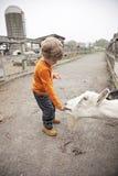 Boy on farm Stock Photo