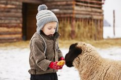 Boy on the farm Royalty Free Stock Photos